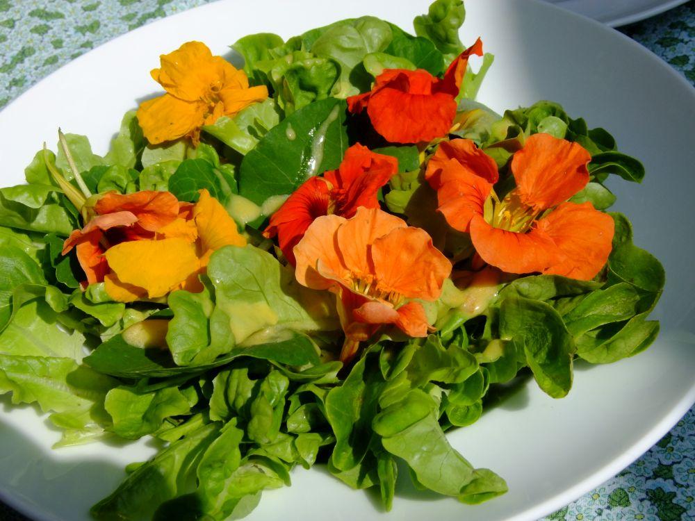 Bunte Kapuzinerkresseblüten krönen jeden Salat