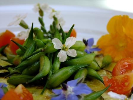 Radieschen Schoten Gemüse