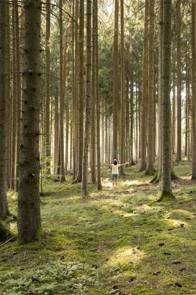 Streuobstwiesen und Waldbaden