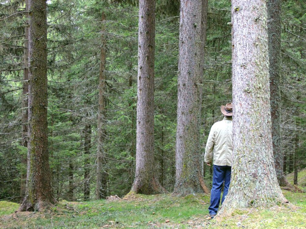 Mensch im Fichtenwald