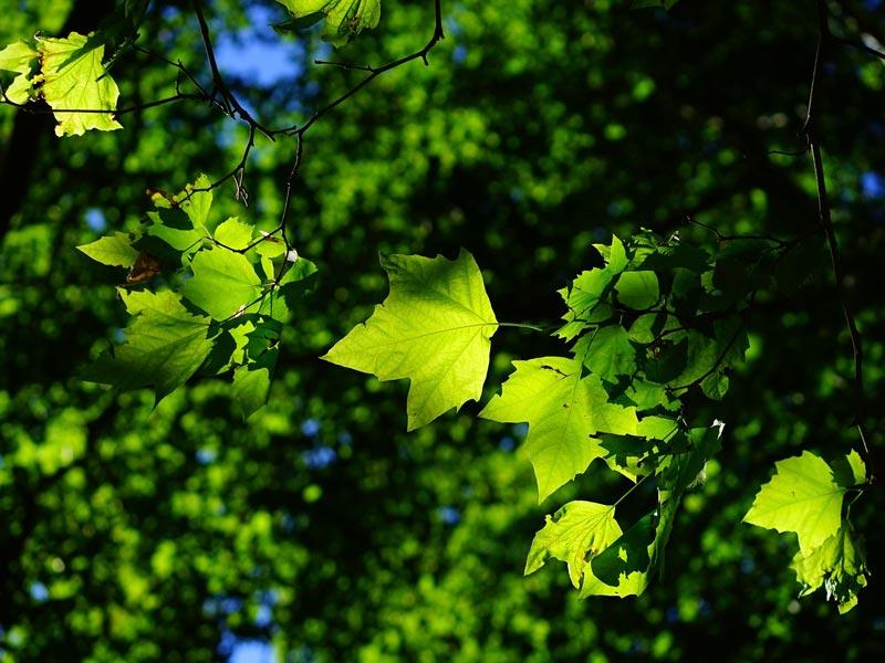 Vortragsangebot Grün ist das Leben